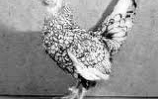 Тип общепользовательных — Нижнедевицкие куры