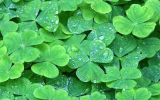 Зеленые растительные корма
