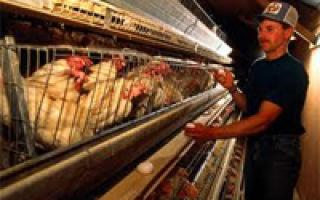 Селекционные птицеводческие фермы научно-исследовательских учреждений