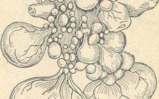 Мочеполовые органы птиц