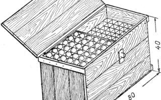 Сбор и хранение яиц