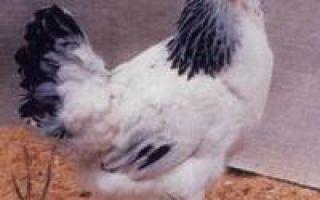 Тип общепользовательных — Первомайские куры