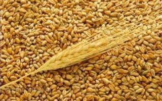 Оценка питательности корма