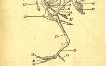 Кости скелета птиц