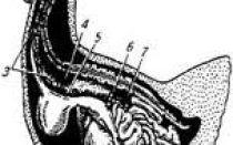 Железы внутренней секреции птиц