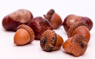 Семена трав и плоды древесных растений