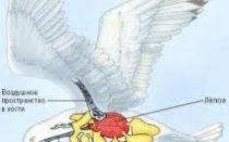 Органы чувств у птиц