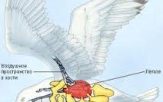 Органы чувств у птиц, какие органы чувств наиболее развиты?